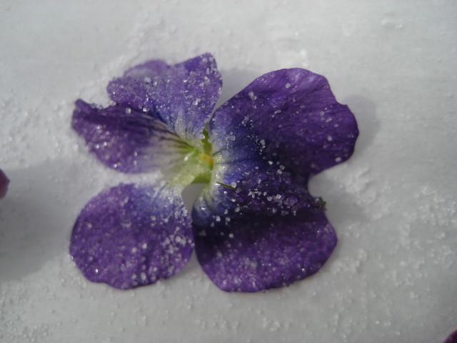 sugared violet