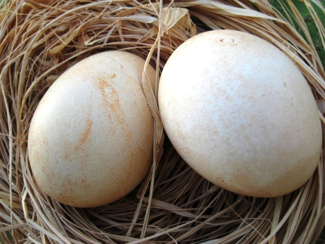 natural dyed Easter eggs with cinnamon and paprika